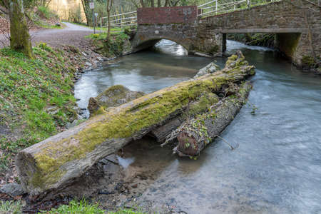 A tree trunk in the Angerbach with the footbridge in the background, seen near Ratingen, North Rhine-Westphalia, Germany