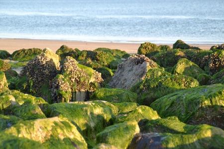 Green breakwater stones on a beach Stockfoto