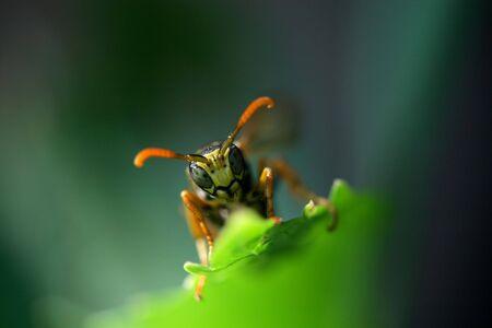 Wasp Stock Photo - 6699945