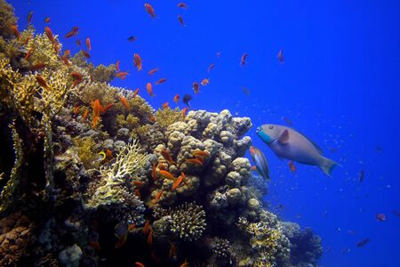 Coral reef - picture taken in the red sea Stock Photo - 7648289