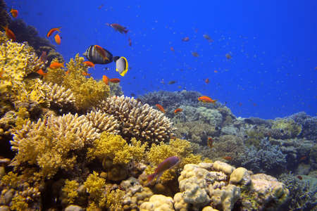 Coral reef - picture taken in the red sea Stock Photo