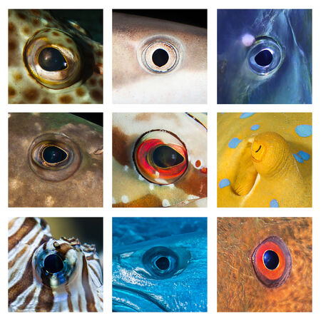 diving save: Closeups of different fish eyes