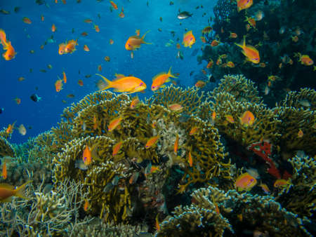 Colorful coral reef off the coast of Hurghada, Egypt