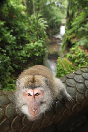 Monkey on the bridge to a jungle city Stock Photo