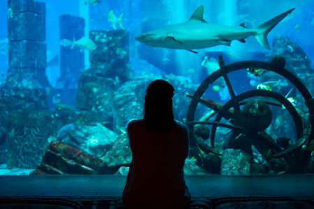 Young woman watch fishes and sharks in beautiful blue aquarium in Dubai
