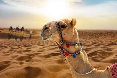 Balade à dos de chameau dans le désert ensoleillé au coucher du soleil avec une tête de chameau souriante