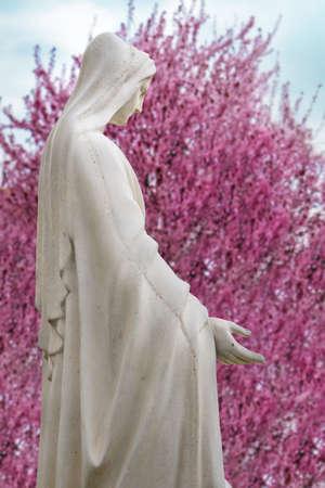 wit Standbeeld van maagdelijke heilige Maria met roze de bloesemachtergrond van de lenteboom