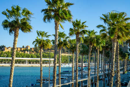 Palm trees at Port malaga with Alcazaba background