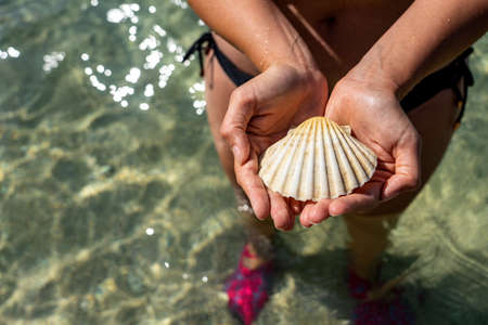 holding shell on the beach clear sea background vacation