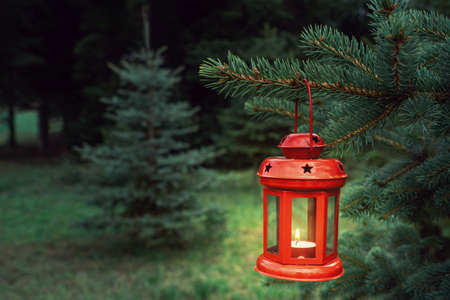 red christmas lantern hanging on a pine in pine forest christmas mood .