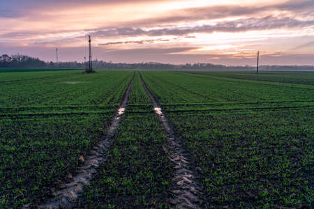 sunset over agricultural fields with tractor tire path .