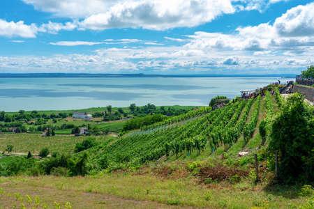 beautiful view of Lake Balaton with vineyards from the Badacsony hill .