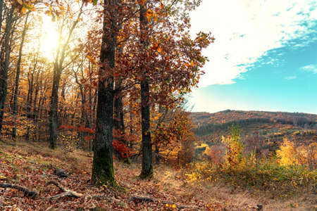 Edge of Autumn forest with sunight in Kőszeg mountain Hungary with hills