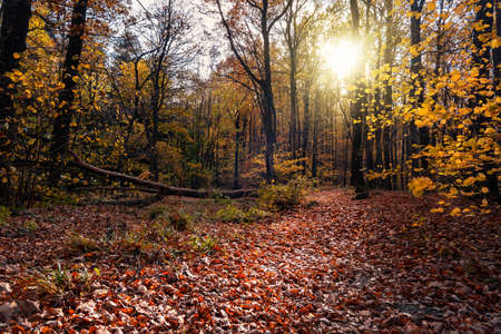 autumn forest with sunight in Kőszeg mountain Hungary