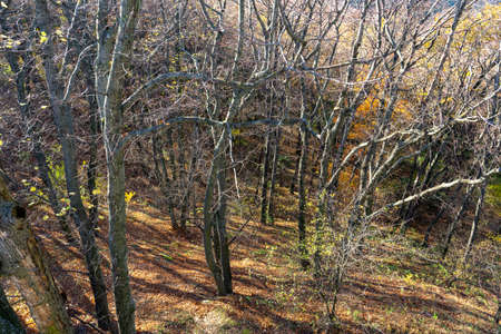 autumn forest from above in Kőszeg mountain Hungary