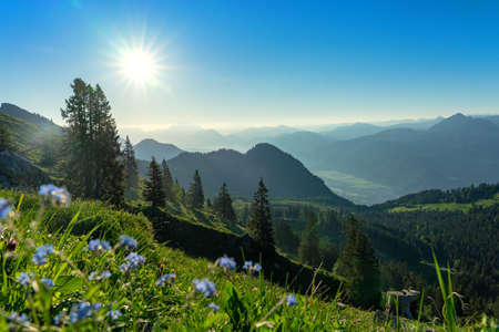 summer tyrol alms view with little blue flowers hills and mountains
