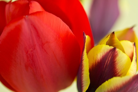 Tulip display photo