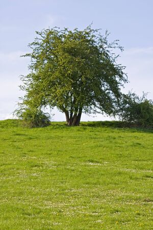 tree on a meadow on a sunny day in spring Stock Photo - 4787492