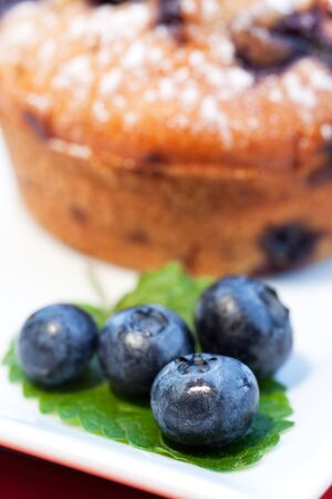 blueberry muffin on a square plate photo