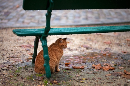 cat under a bench in the rain