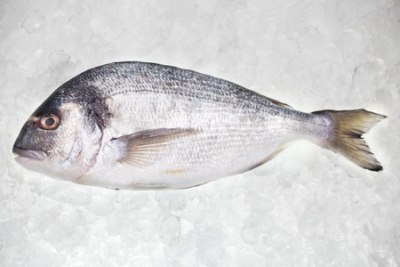 gilthead bream: raw bream on crushed ice Stock Photo
