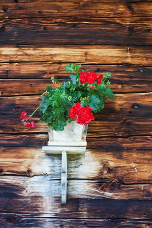 geranium flowers on a bavarian hut  Stock Photo - 11960915