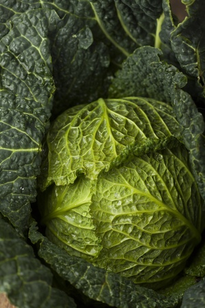 fresh raw savoy cabbage  Stock Photo - 17498791