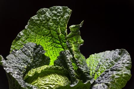 fresh raw savoy cabbage Stock Photo - 17752420