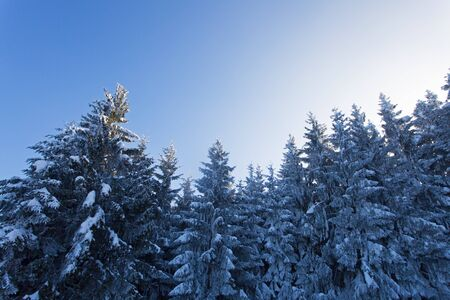 snow covered trees in winter Stock Photo - 18937555