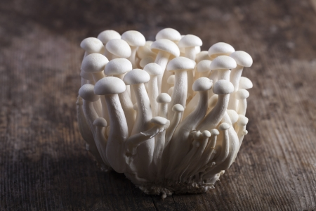 closeup of shimeji mushrooms  Stock Photo - 19154339