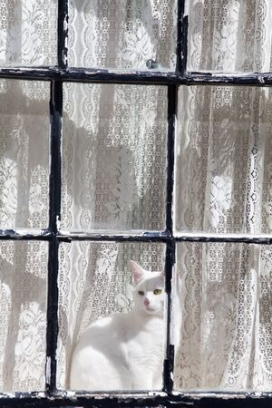 white cat in a window Stock Photo - 19385115