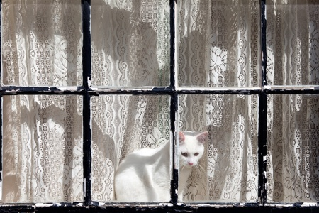 white cat in a window Stock Photo - 19385117