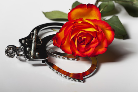 handcuffs with a rose Stock Photo