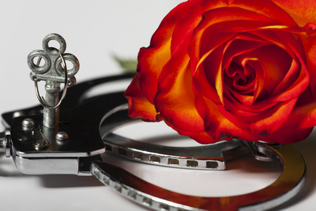 closeup of handcuffs with a rose Stockfoto