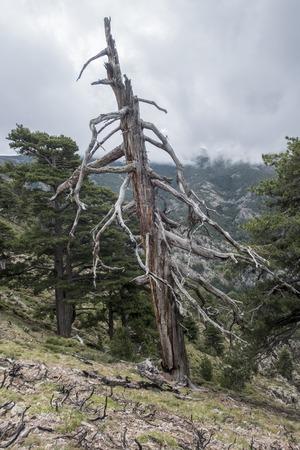 old tree on ground.