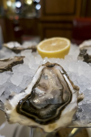 closeup of a fresh open oyster on ice