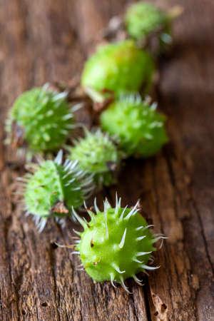 green chestnuts on dark wood 免版税图像