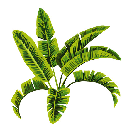 Painting tropic palm banana leaves, tree vector jungle floral background, wallpaper hand drawn vector Illustration