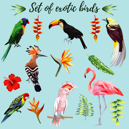 Realistic collection of beautiful exotic tropical birds vector macaw, parrot, pink flamingo, toucan, Udot. On a blue background with leaves of palm banana, Strelitzia, hibiscus flower.