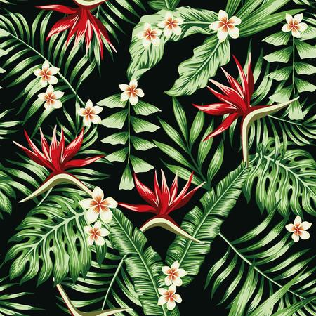 Plantas tropicales hojas y flores del plumeria frangipani y el ave del paraíso. Seamless patrón de playa en el fondo negro de fondo Ilustración de vector