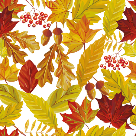 Vector autumn composition of rowan acorn and red yellow leaves of oak, maple, birch. Seamless pattern nature white background