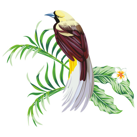 Exotic single tropical bird with plant flower print wallpaper white background