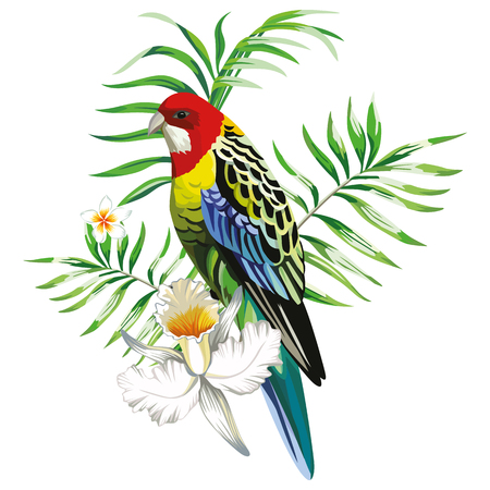 Multicolor single parrot with tropical plants and flowers. Çizim
