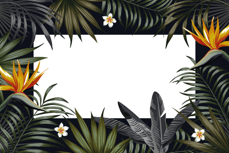 Vector night tropical design for flyer or banner. Vacation summer poster with tropical flower and leaves. Illustration with strelitzia, plumeria jungle exotic leaf palm and monstera on the black night background