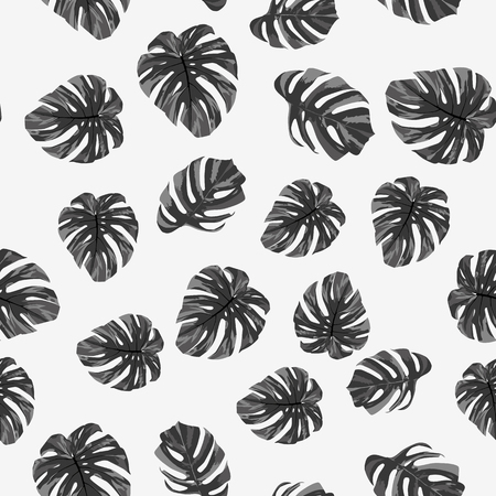 Grayscale tropical monstera leaves seamless pattern on the white background. Black white vector illustration