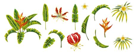 Green tropic banana leaves and floral Plumeria, Frangipani, Gloriosa, Flame Lily, Climbing Lily, Heliconia, Bird of Paradise flowers. Isolated high quality vector illustration on white background.