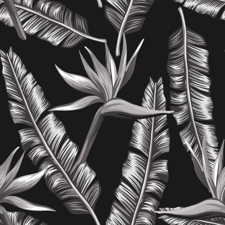 Creative black white seamless illustration bird of paradise, strelizia flowers and palm, banana leaves on the black background. Design fabric pattern, trendy foliage wallpaper. Vettoriali
