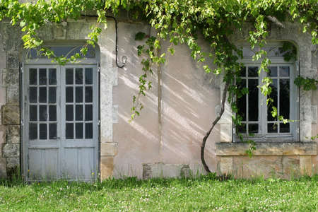 Unattended Grapevines - grape vines overgrowing an abandoned french country house Stock Photo