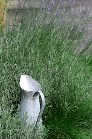 Garden Pitcher - French watering-can surrounded with culinary herbs.
