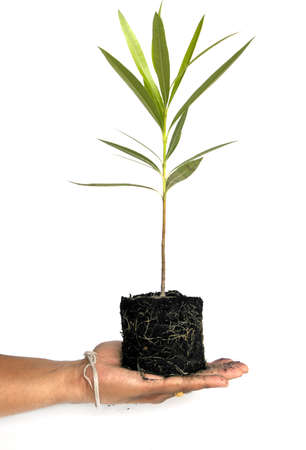 savety: Tree in a male hand isolated on white background.